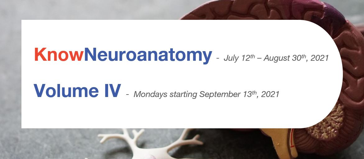 mark your calendars knowneuroanatomy mini-series starting July 12th and volume iv starting September 13th