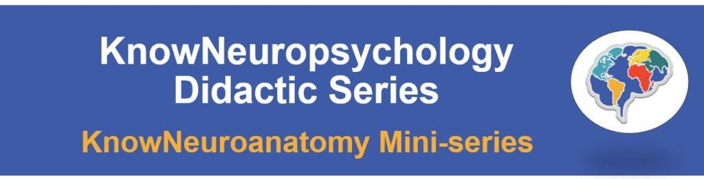 knowneuroanatomy miniseries