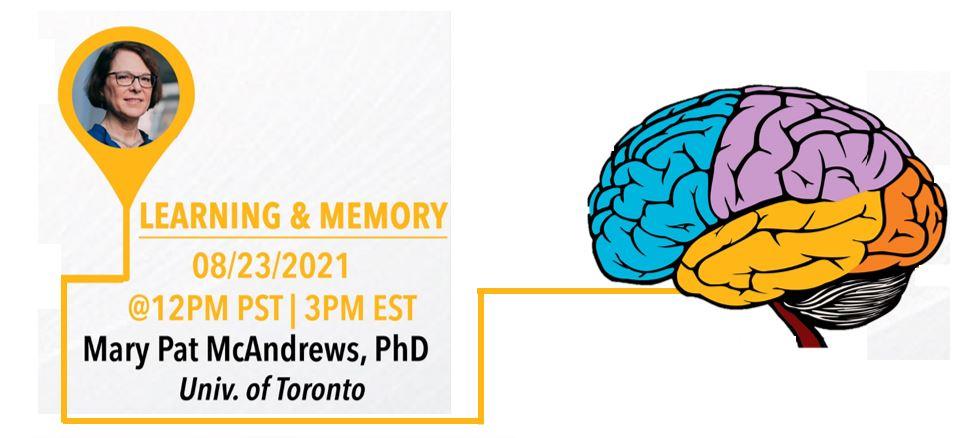 Neuroanatomy of learning and memory