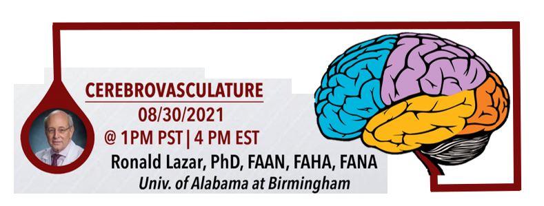Cerebrovasculature with Dr. Ronald Lazar